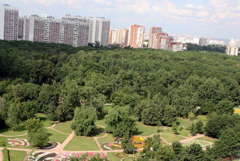 В Щербинке начали кронировать деревья