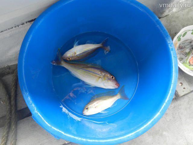 Нерест грядет: рыбалку ограничат на два месяца