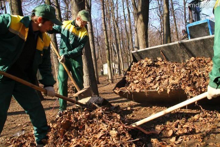 Лес очистят от мусора, оставленного отдыхающими