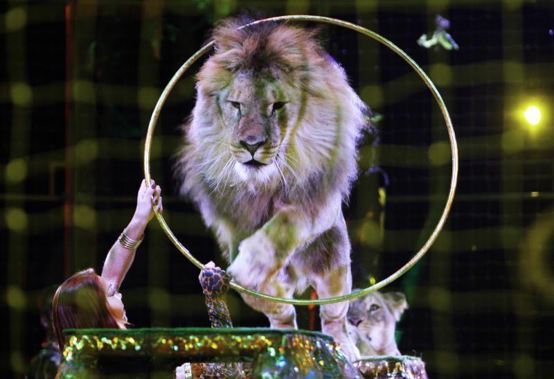 Циркачи из Европы дали представление в Коммунарке