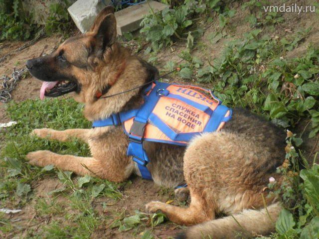 В поселении Марушкинское начался отлов бродячих собак