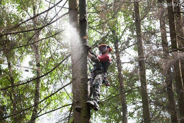 Деревья опилили в Десеновском