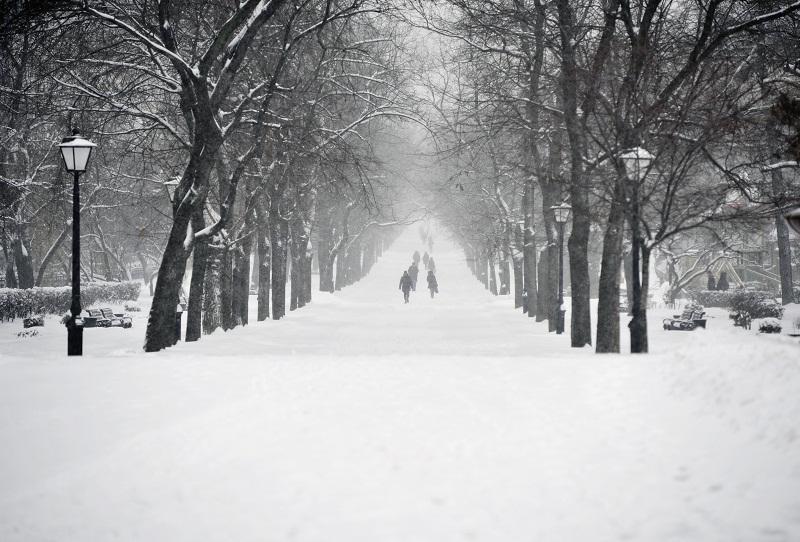 Москвичи смогут выбрать площадки для 26 «народных парков»