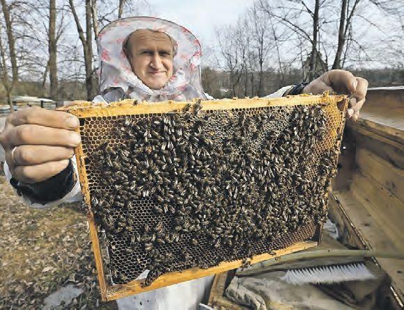 Проснулись рано правильные пчелы