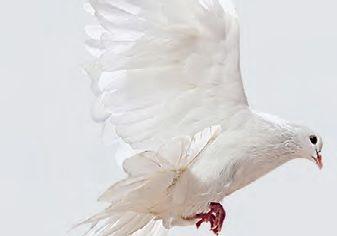 Стены-экраны и белые голуби
