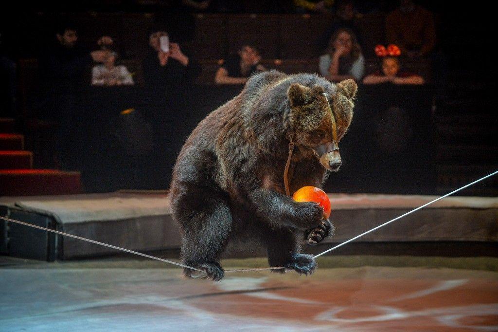 На концерте коДню защиты детей в поселении Московский выступили артисты Большого Московского Государственного цирка