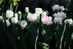 город общество цветы (2)