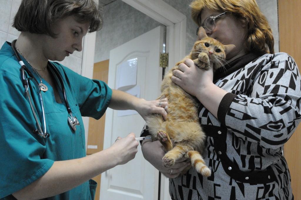 В Роговском вакцинируют домашних животных