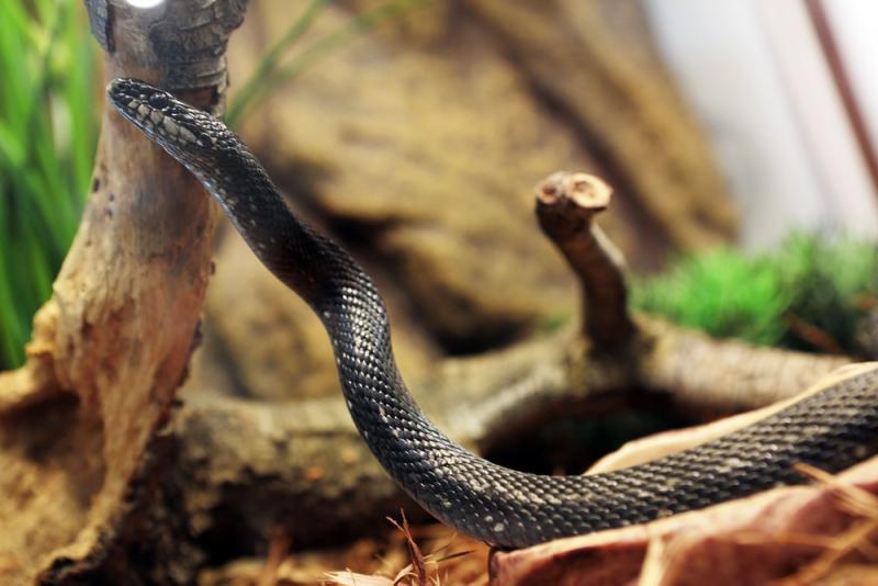 Змеи в лесах ТиНАО стали активнее после ливней