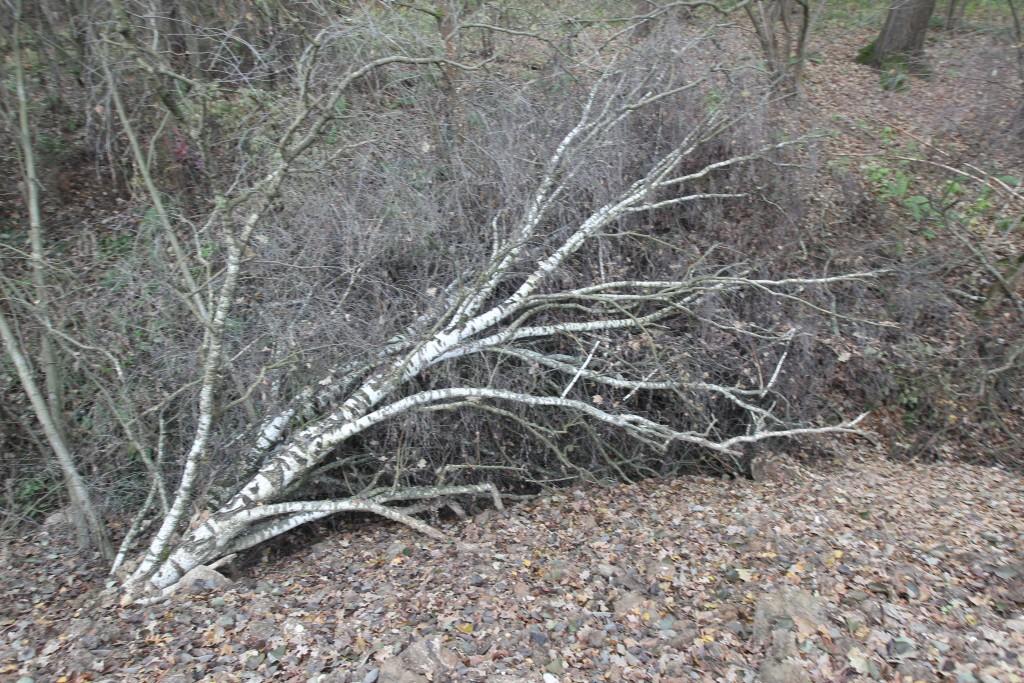 Строители народного парка «намочили» все деревья