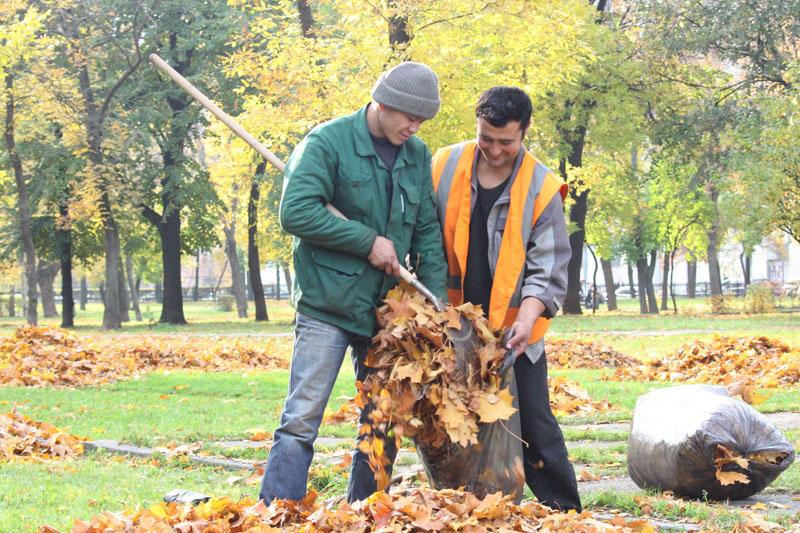 Москвичи проголосуют за частоту уборки листвы во дворах