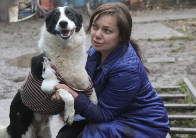 Спасение Симбы: пес пошел на поправку