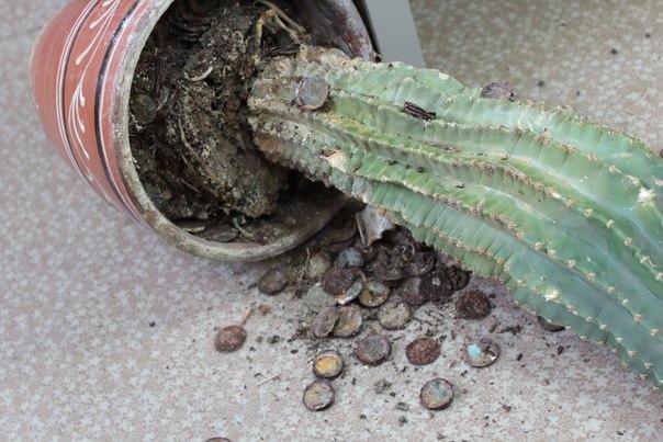 Клад из множества монет прятался под кактусом
