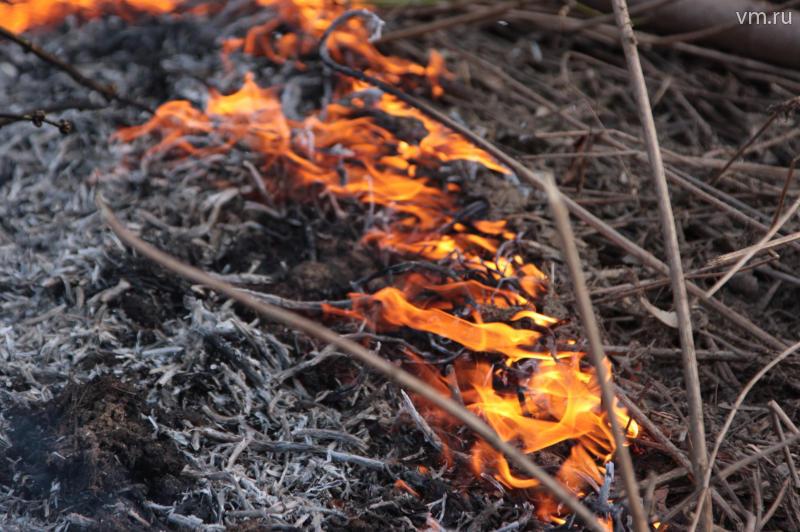 Сжигание сухой травы запретили на законодательном уровне