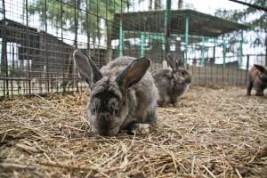 Животные изьятые в Москве из незаконного зоопарка