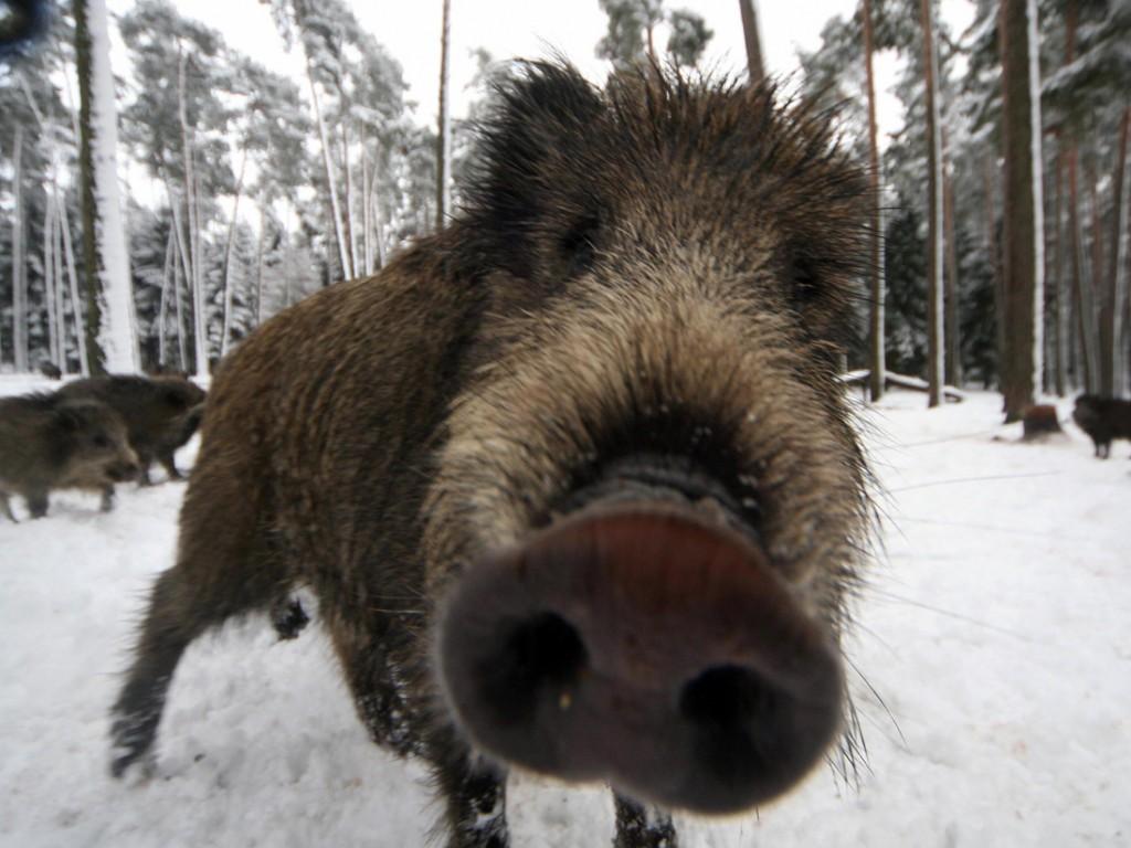 В Яковлевском уберут лабазы для ловли диких животных