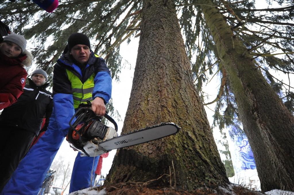 Кремлевскую елку нашли в Истринском лесхозе