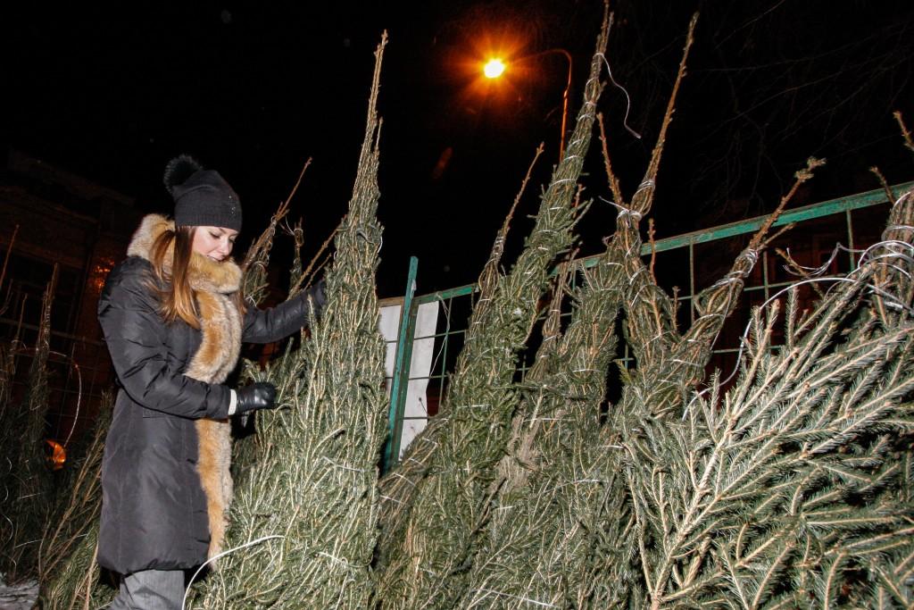 За неделю в Москве закрыли 70 нелегальных елочных базаров