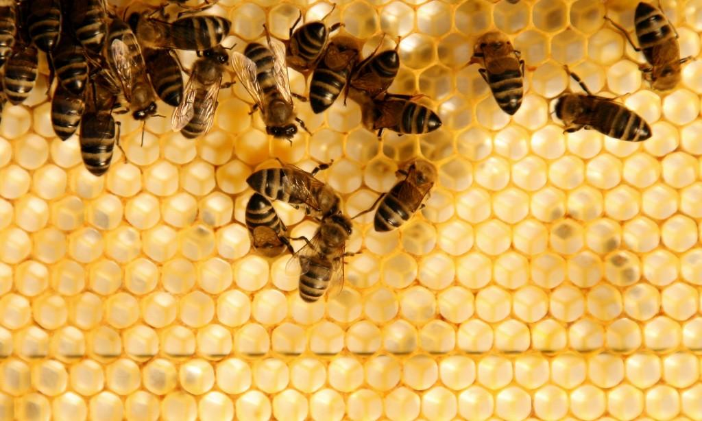 Московская оттепель: в Кузьминском парке зажужжали пчелы