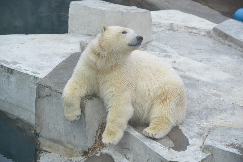 Юные посетители московского зоопарка могут отправиться в путешествие «Там, на заснеженных дорожках»