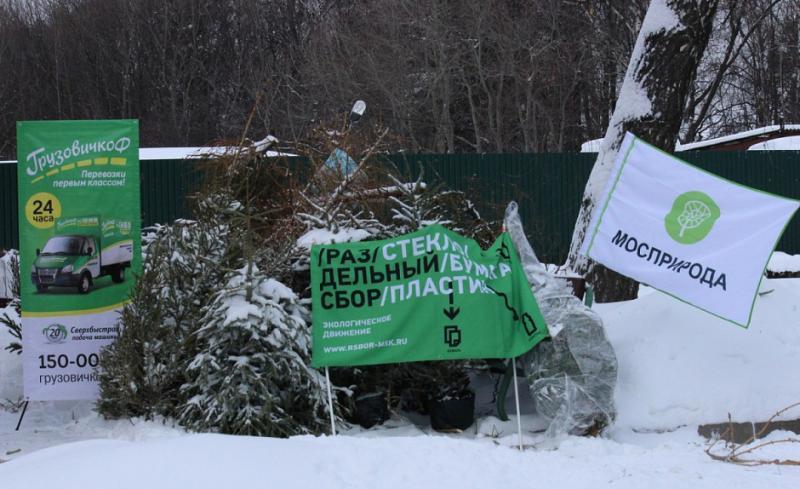 В утилизацию попало более 1,2 тысячи новогодних елей