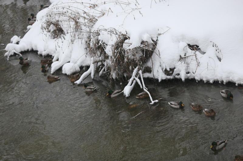 Москвичей просят следить за птицами
