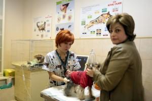 Дата: 17.04.2013, Время: 17:48 Ветеринарная клиника Свой доктор на Новочеремушкинской улице