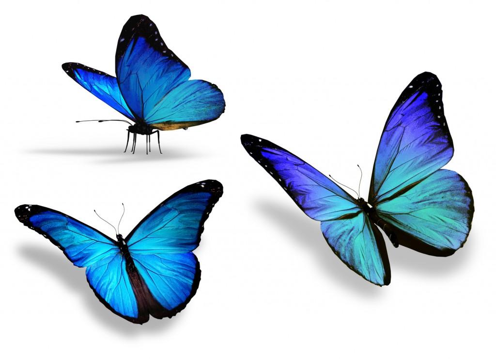 Эффект синей бабочки