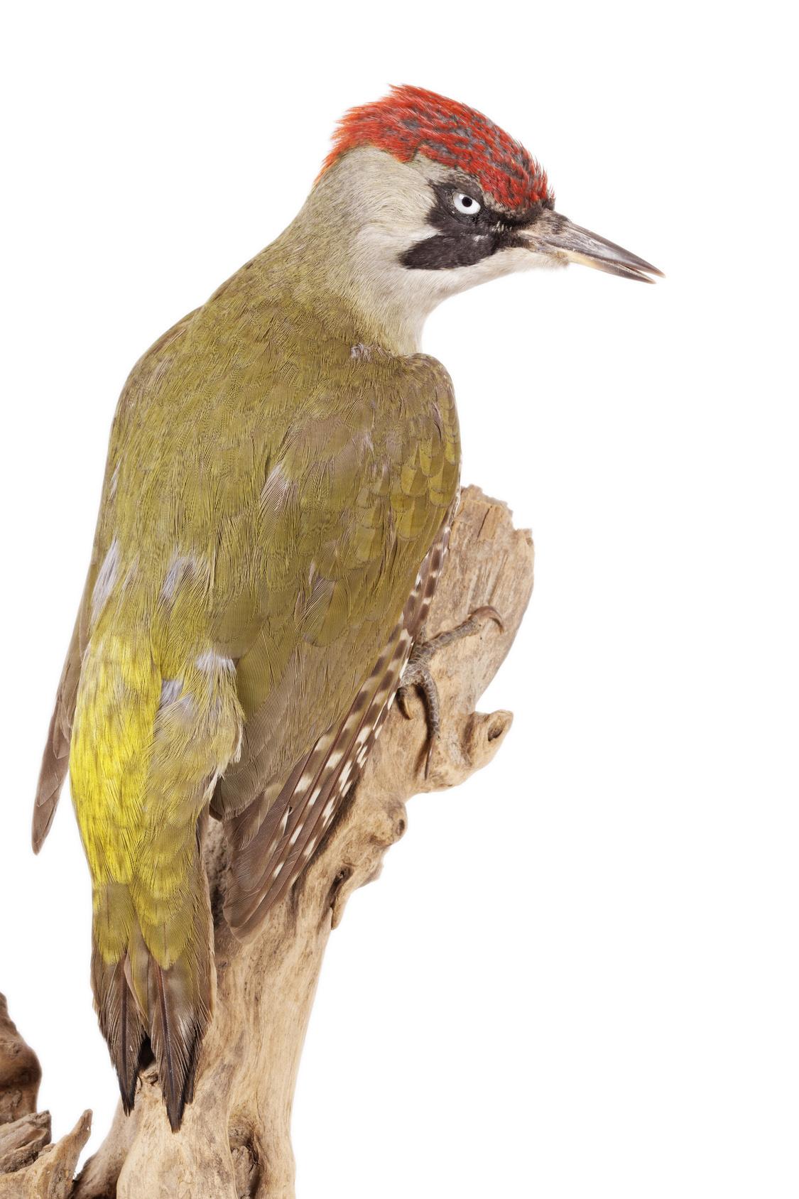 Редкие птицы расквартировались