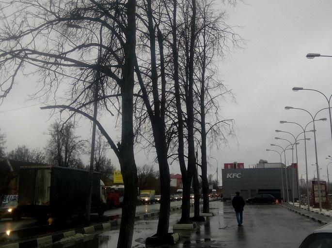 В городском округе Щербинка уберут сухостойные деревья