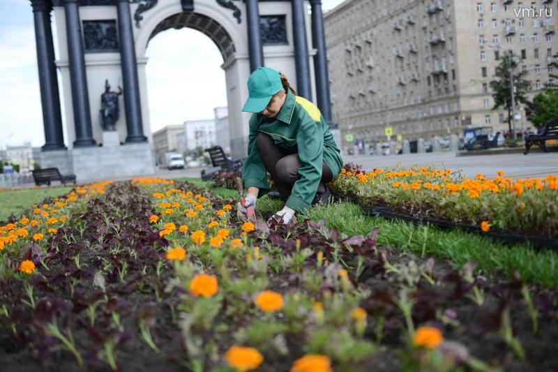 У москвичей появится возможность выбрать цветы для украшения города
