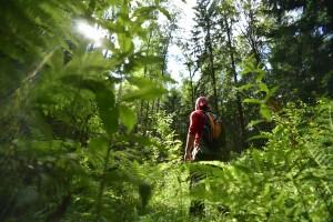 """Специальный корреспондент """"Вечерней Москвы"""" Андрей Коц заблудился в лесу"""