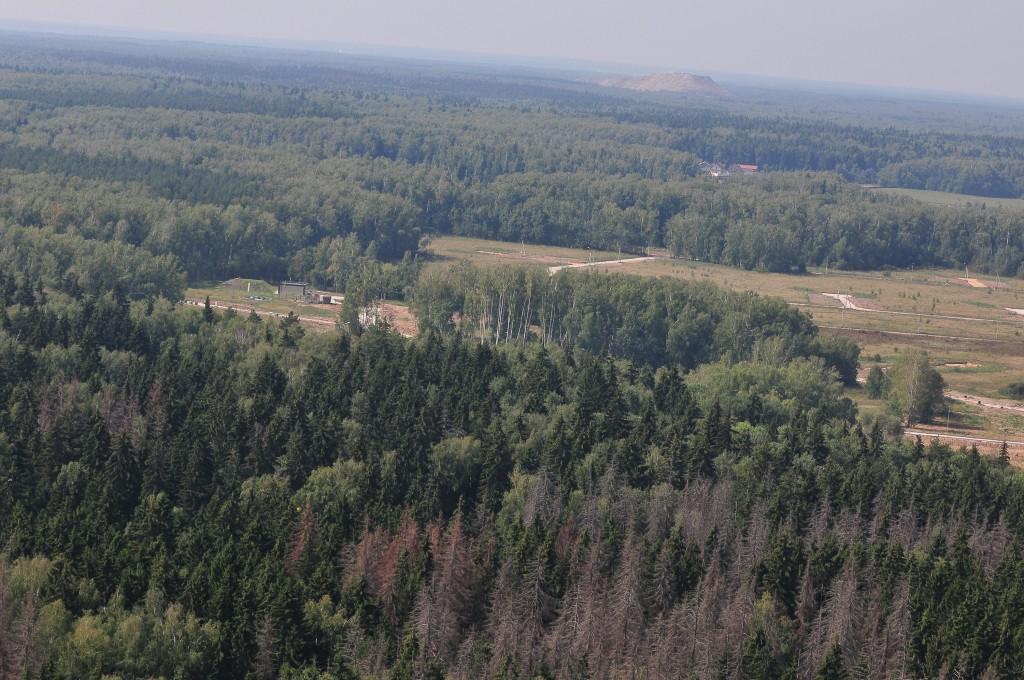 21 марта: Всемирный день защиты лесов