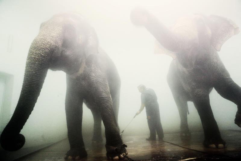 Тайны биографии слона