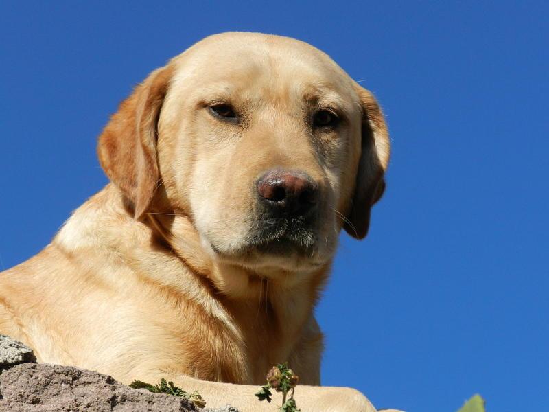 Устройство площадок для выгула собак может стать обязательным для застройщиков