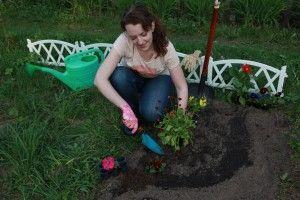 В «Аптекарском огороде», что при Ботаническом саде расцвела волчья ягода