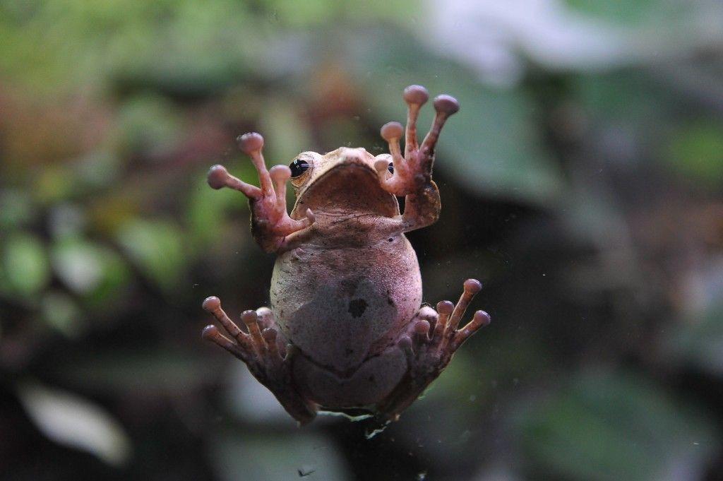 Весна: лягушки Московского зоопарка свили гнезда