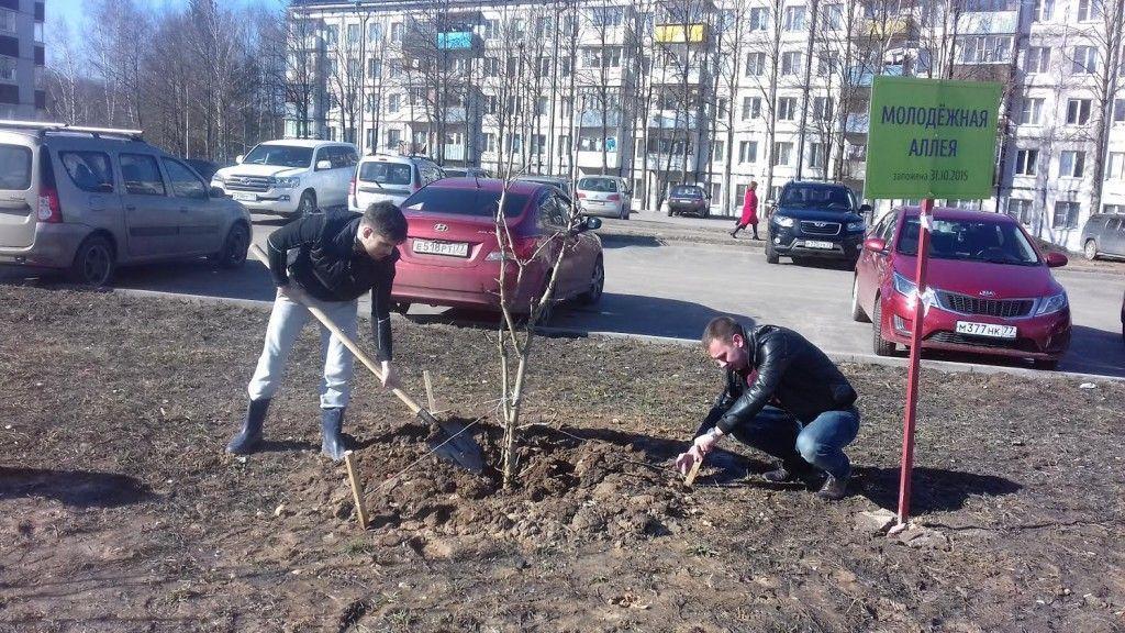 Каштаны на молодежной аллее в Вороновском окончательно прижились