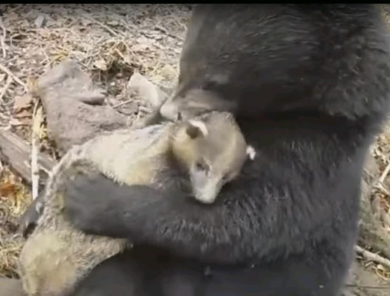 В Приморском сафари-парке образовалась новая пара друзей