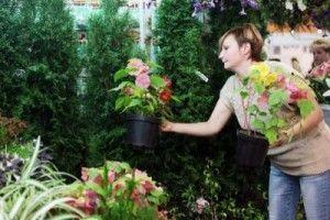 Цветочную гостиницу откроют в Ватутинках