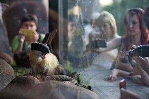 московский зоопарк куница