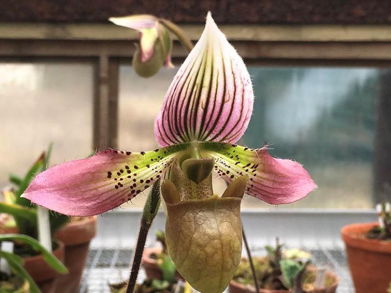 На фестивале орхидей в «Аптекарском городе» расцвели редкие виды