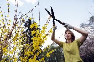 В «Сокольниках» 1 мая откроется малый розарий