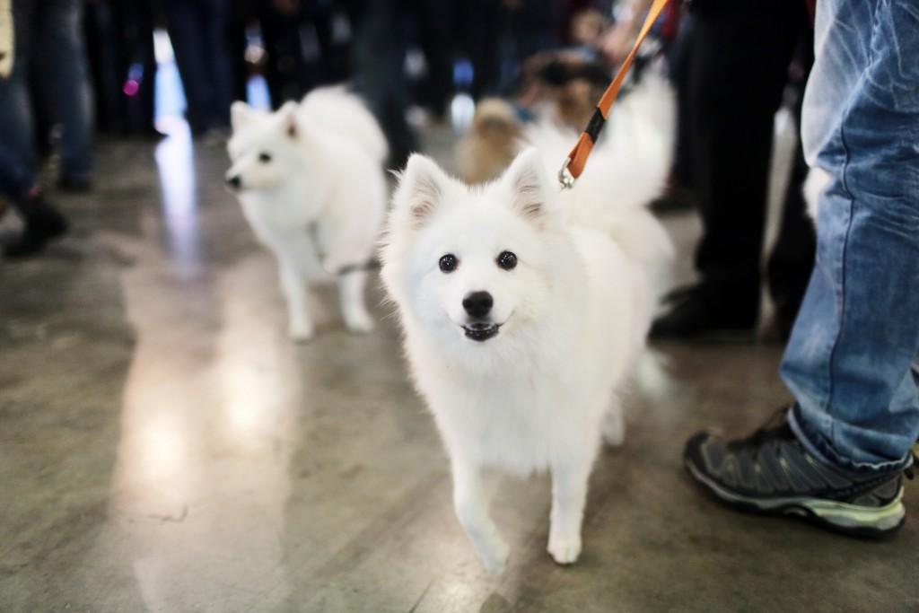 В Мосгордуме предлагают ввести обязательную регистрацию домашних животных