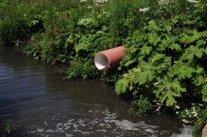 """Предприятие возместит ущерб, нанесенный реке Незнайка. Фото: архив """"ВМ"""""""