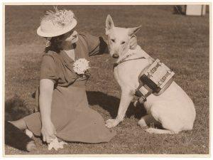 Полицейская собака с прикрепленным радиоприемником. Фотоархив Wikipedia