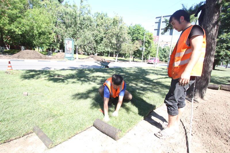 Стричь или не стричь: Активные граждане определят правила покоса газонов в своих дворах