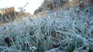 Погода на выходные: из-за заморозков красный уровень опасности сохранится