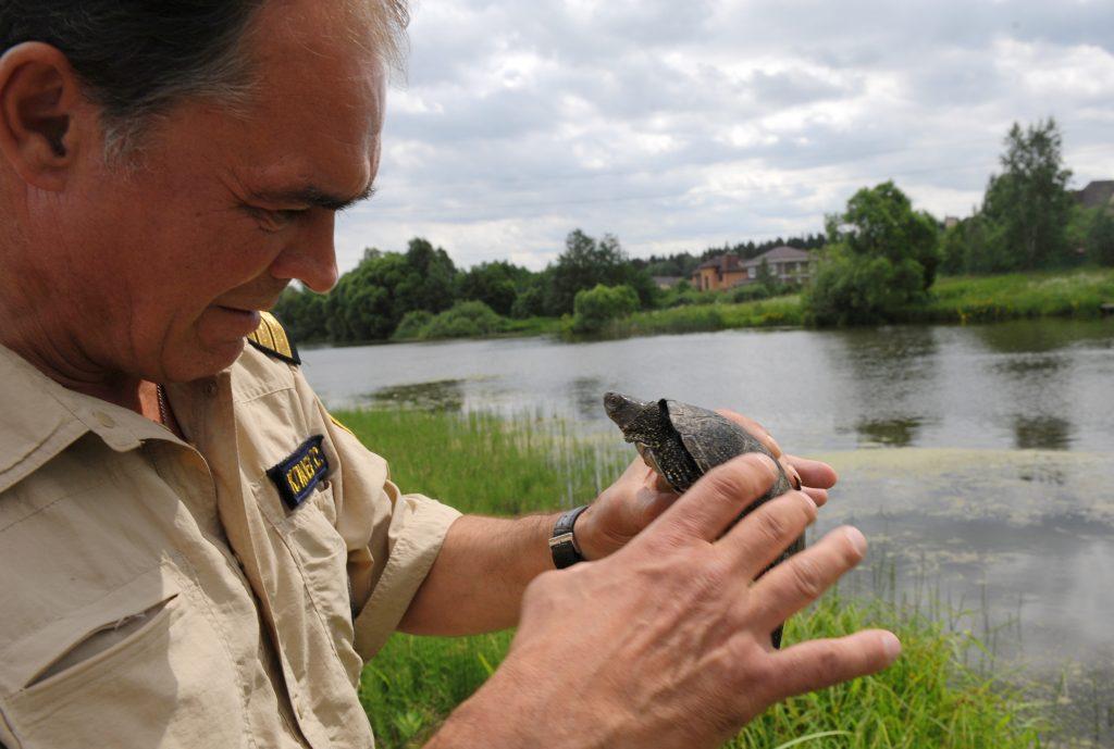 Черепахи из Жилетовки пугают рыбаков