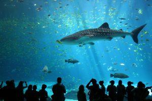 8 июня – Всемирный день океанов. Фото: Википедия.